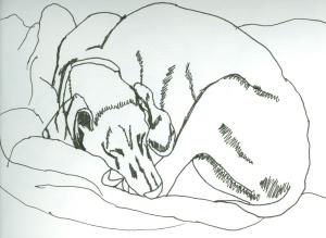 """""""sleeping weimaraner"""""""