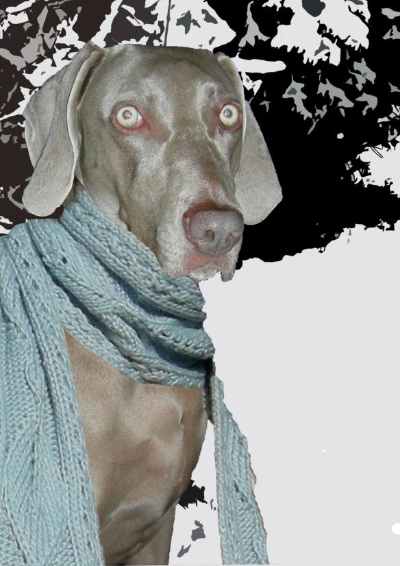 """""""weimaraner in a scarf"""""""