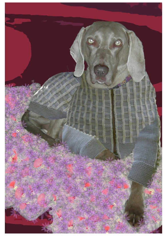 """weimaraner in knitted jacket"""