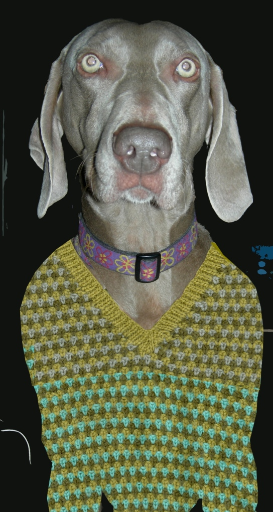 """weimaraner in a sweater"""