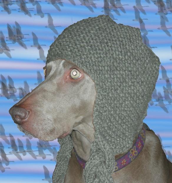 """""""Weimaraner in a hat"""""""