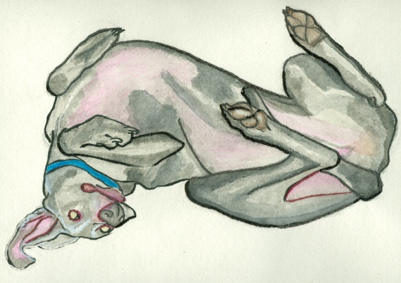 """weimaraner lying on its back"""