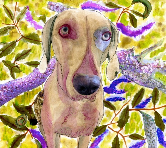 """mixed media weimaraner picture on water colour paper"""