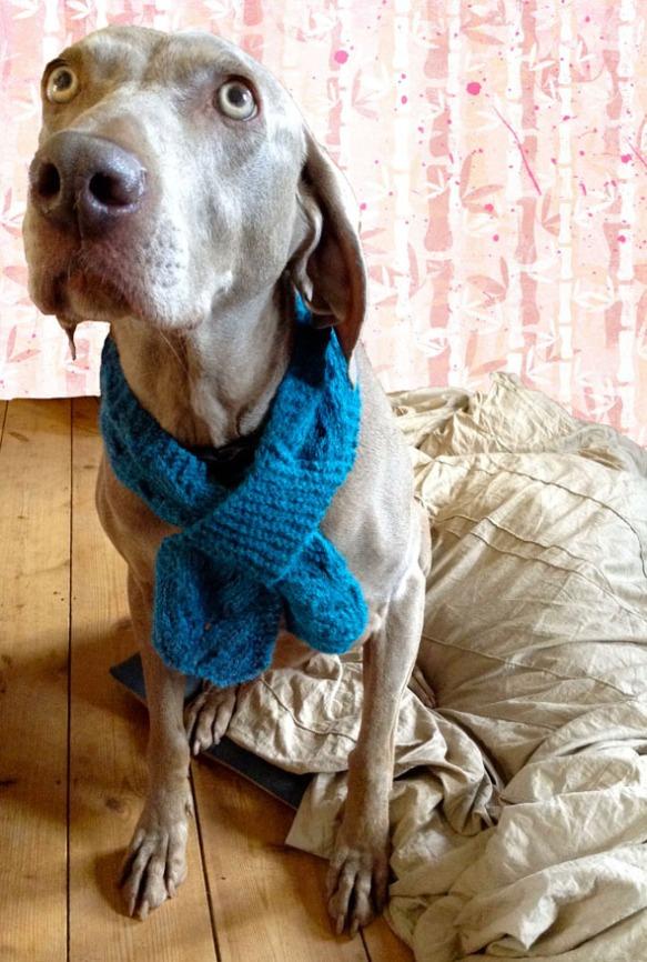 sas modelling scarf