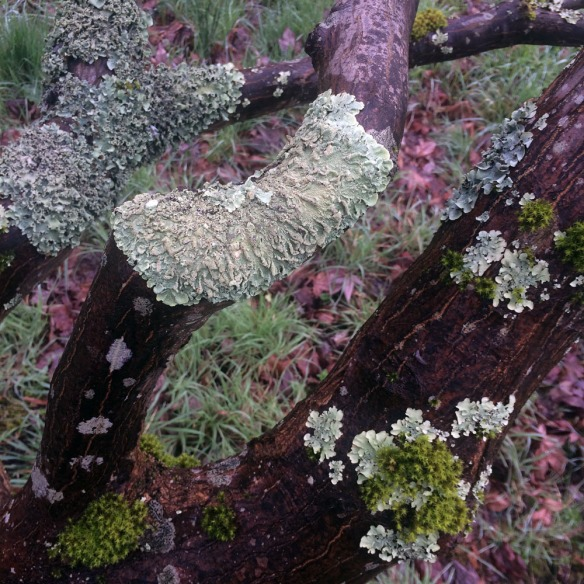 moss on tree low res